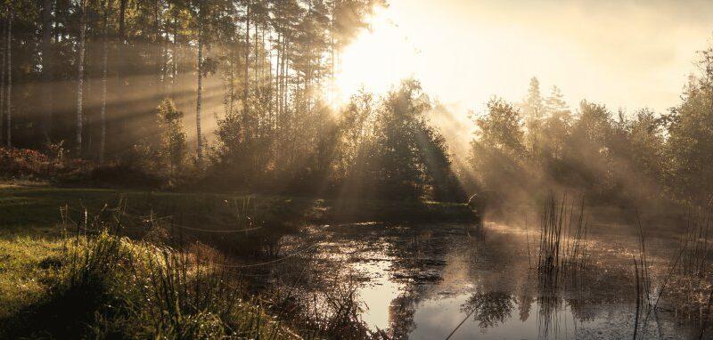 Meilink opnieuw gecertificeerd voor Programme for Endorsement of Forest Certification (PEFC)